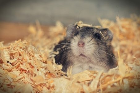 Do Hamsters Get Cold?