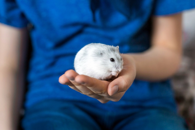 cool facts about hamsters